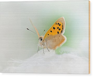 Small Copper Wood Print