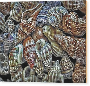 Small Sea Shell Collection Wood Print by Walt Foegelle