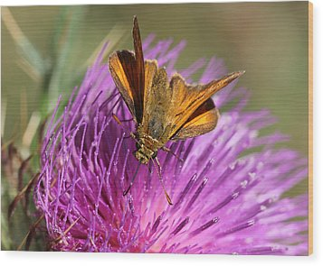 Wood Print featuring the photograph Small Skipper - Thymelicus Sylvestris by Jivko Nakev