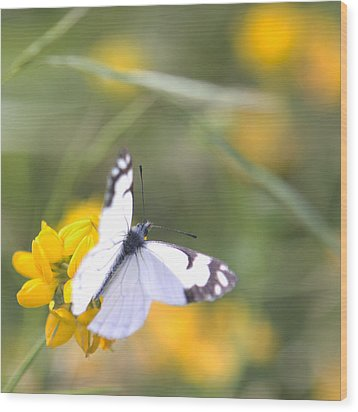 Small White Butterfly On Yellow Flower Wood Print by Belinda Greb
