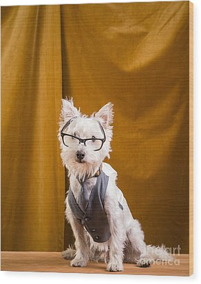 Small White Dog Wearing Glasses And Vest Wood Print by Edward Fielding