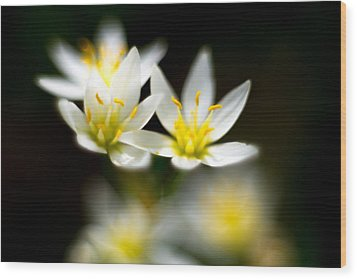 Wood Print featuring the photograph Small White Flowers by Darryl Dalton