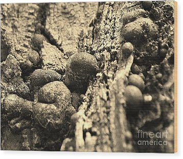 Small Worlds Wood Print by William Wyckoff