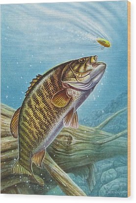 Smallmouth Bass Wood Print by JQ Licensing