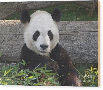Smiling Giant Panda Wood Print by Lingfai Leung