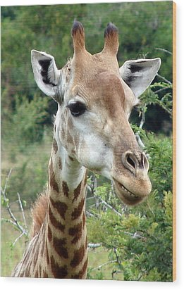 Smiling Giraffe Wood Print by Ramona Johnston