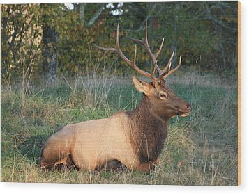 Smoky Mountain Elk Wood Print by Mountains to the Sea Photo