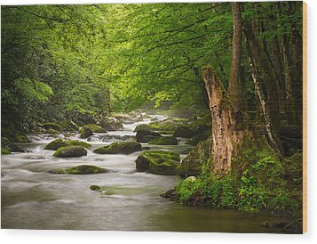 Smoky Mountains Solitude - Great Smoky Mountains National Park Wood Print