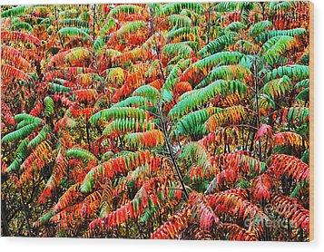 Smooth Sumac Fall Color Wood Print by Thomas R Fletcher
