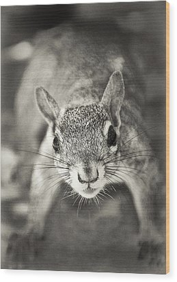 Snack Time Wood Print by Patrick M Lynch