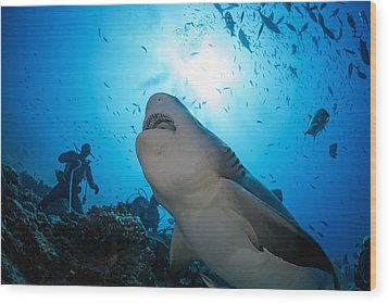 Snacking Bull Shark Wood Print by Dave Fleetham