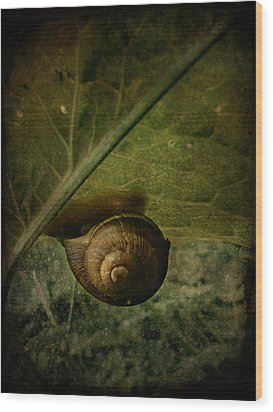 Snail Camp Wood Print by Barbara Orenya