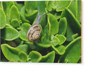 Snail Wood Print by Ivelin Donchev