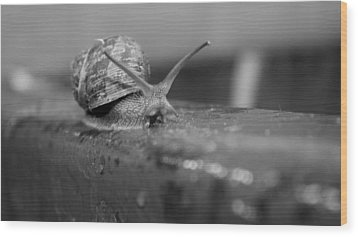 Wood Print featuring the photograph Snail by Lora Lee Chapman