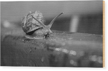 Snail Wood Print by Lora Lee Chapman