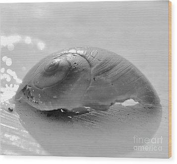 Snail Shell Wood Print