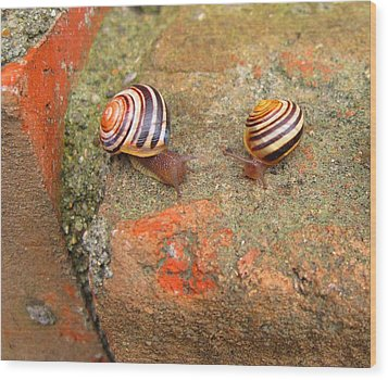 Wood Print featuring the photograph Snail Snail The Gangs All Here by Mary Bedy