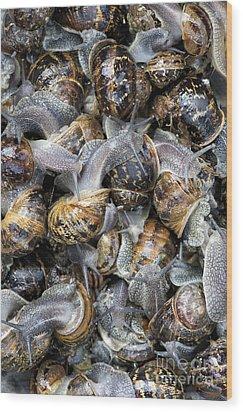Snails Wood Print by Tim Gainey