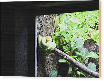 Snake - National Aquarium In Baltimore Md - 12123 Wood Print by DC Photographer