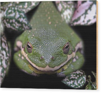 Snakefrog Wood Print by Joseph Tese