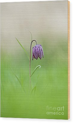 Snakes Head Fritillary Shallow Dof Wood Print by Tim Gainey