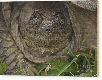 Wood Print featuring the photograph Snapper by Randy Bodkins