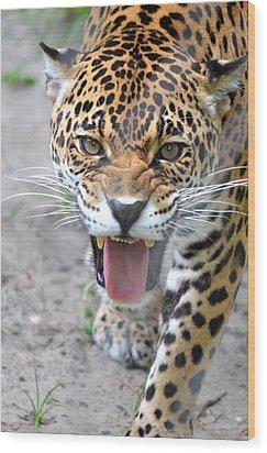 Snarling Jaguar  Wood Print