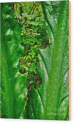 Wood Print featuring the photograph Sneak Peek by Cynthia Lagoudakis