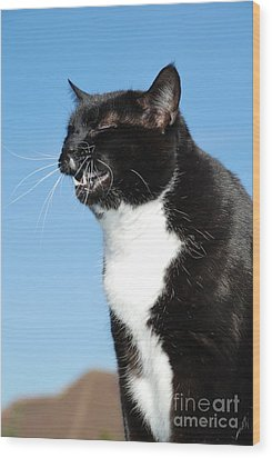 Sneezing Cat Wood Print