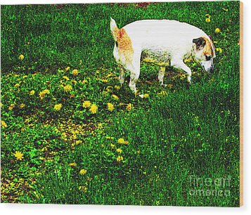 Sniffin The Dandelions Wood Print by Minding My  Visions by Adri and Ray