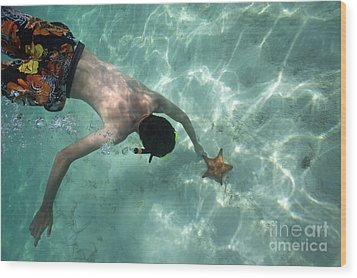 Snorkeller Touching Starfish On Seabed Wood Print by Sami Sarkis