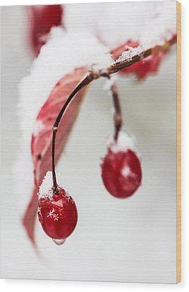 Snow Berries Wood Print by Aaron Aldrich