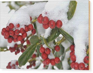 Snow Berries Wood Print