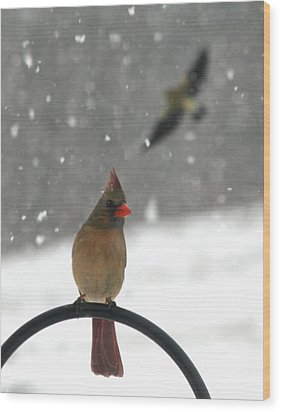 Snow Bird II Wood Print