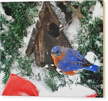 Snow Bluebird Christmas Card Wood Print