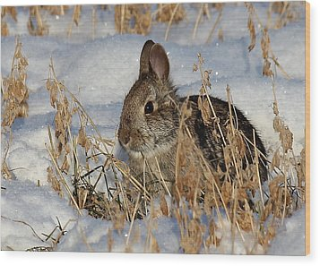 Snow Bunny Wood Print by Penny Meyers