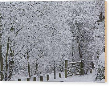 Snow Canopy Wood Print by David Birchall