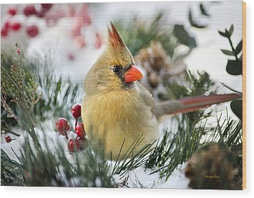 Wood Print featuring the photograph Snow Cardinal by Christina Rollo