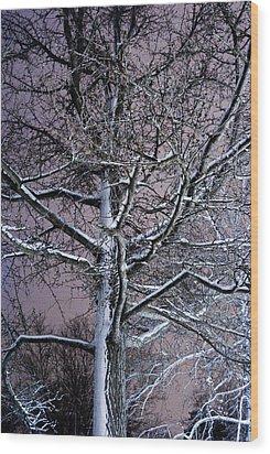 Snow Coat Wood Print by Joe Scott
