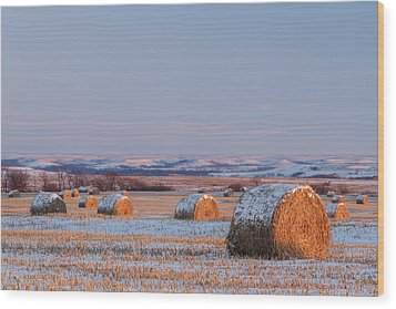 Snow Covered Bales Wood Print by Scott Bean