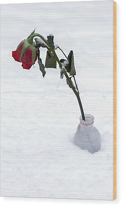 Snow-covered Rose Wood Print by Joana Kruse