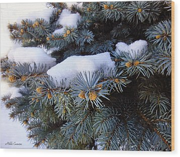 Snow Covered Spruce Wood Print by Mikki Cucuzzo