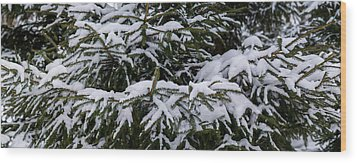 Snow Covered Spruce Tree - Featured 2 Wood Print by Alexander Senin