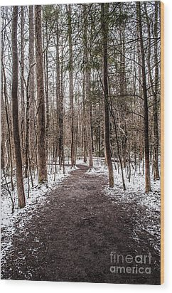 Wood Print featuring the photograph Snow Covered Trail by Debbie Green