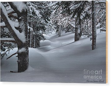 Snow Covered Trail Wood Print by Steven Reed