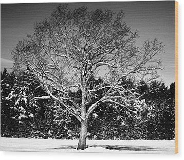 Snow Covered Tree Wood Print