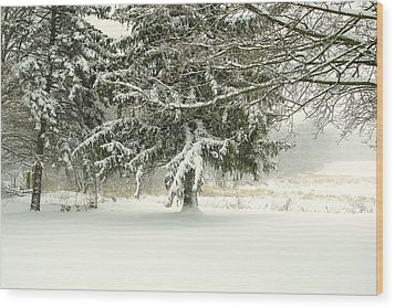 Snow-covered Trees Wood Print by Lars Lentz