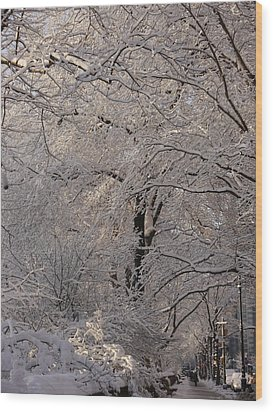 Snow Covered Trees On Central Park West Wood Print