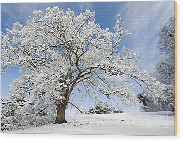 Snow Covered Winter Oak Tree Wood Print by Tim Gainey