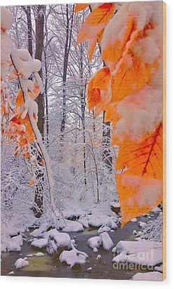 Snow Covered Woods And Stream Wood Print